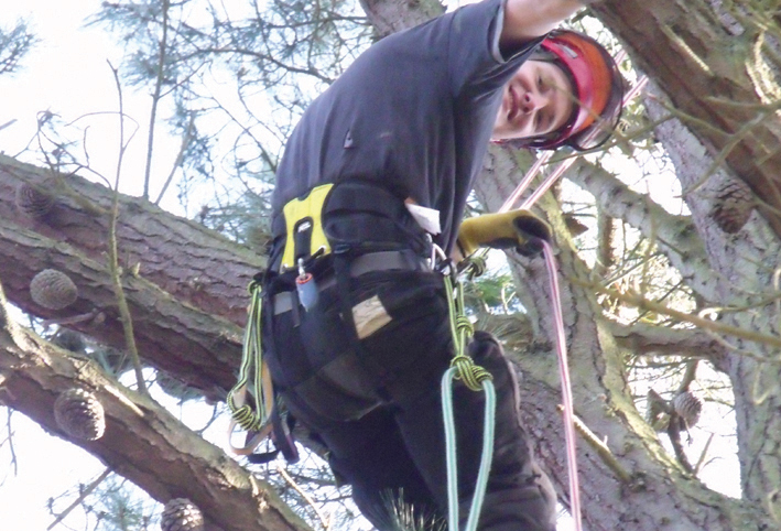 tree climbing for financial reward